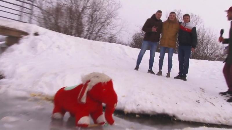 Первый городской канал в Кирове - ВТ день слона в чистых прудах 4 » Freewka.com - Смотреть онлайн в хорощем качестве