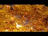 Айдамир Мугу (Адыгэ) - Любимая Моя (2011 New)