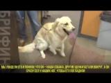 Школьники подарили собаке лапу