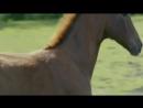 Тёмная лошадка. Документальный фильм. 2015 г.