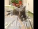 Семья москвичей наняла армию адвокатов, чтобы расследовать смерть своего кота