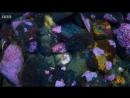 This sea cucumber waking up to eat Морской огурец проснулся и кушает