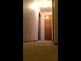 Папугай какаду ищет Наташу в коридоре _ Наташа ты где _D