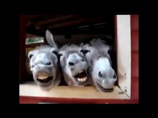 Весёлые лошади.mp4