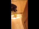 Кот бешеный