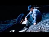 Освободите Вилли 2: Новое приключение / Free Willy 2 (1995) BDRip 720p [vk.com/Feokino]