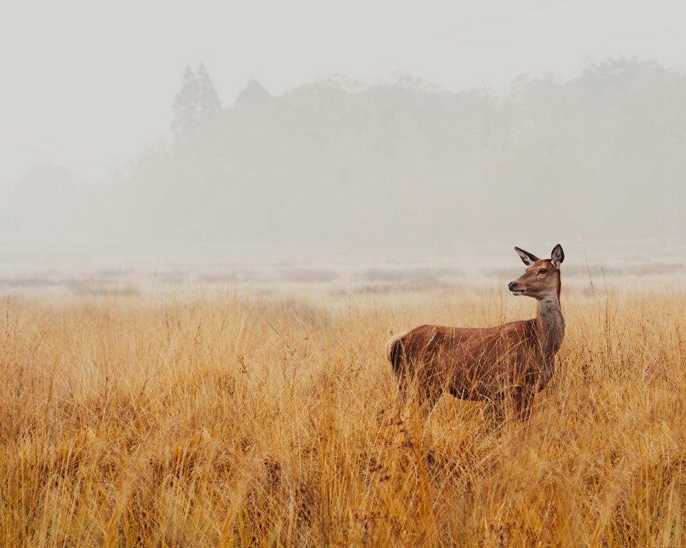 Осень Иды Холлис (Ida Hollis)