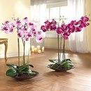 Орхидея фаленопсис: как ухаживать круглый год