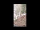 Мистическое существо в лесном парке Бийска