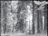 Группа Лукьяновка - Амнистия прощай