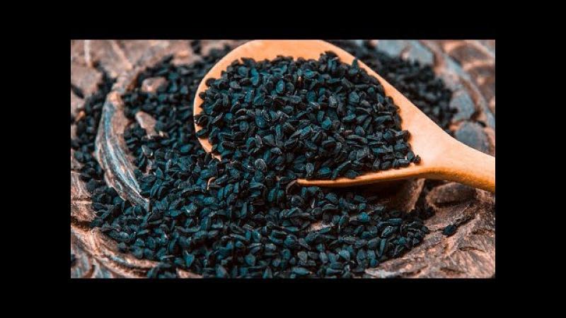 Король всех растений — лечит все болезни, кроме смерти! Невероятно мощные целебные свойства!