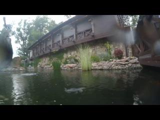 Парк Лога, Старая Станица - карпы в пруду, 2017