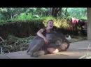 Эти забавные животные свежие приколы про животных смешные моменты