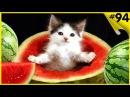 Приколы с котами под музыку Смешная подборка с котами Funny cats
