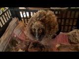 Фермер на Херсонщине подбирает выброшенных из гнезд птенцов и выкармливает