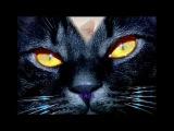 Volevo un gatto nero - Zecchino D'oro
