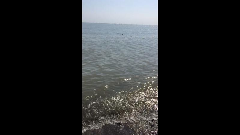 Lenkoran deniz 🌊🕊🇦🇿