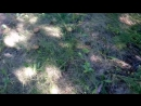 Грибочки в лесу 2