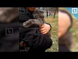 Трогательное спасение кота