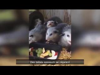 Приколы лучшее приколы про баб и животных BEST FUNNY VIDEOS HD