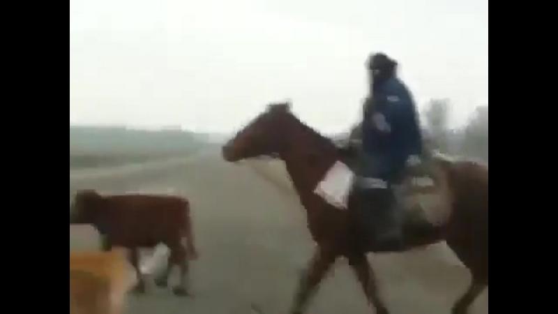 Россея Рэйнджер ДПС