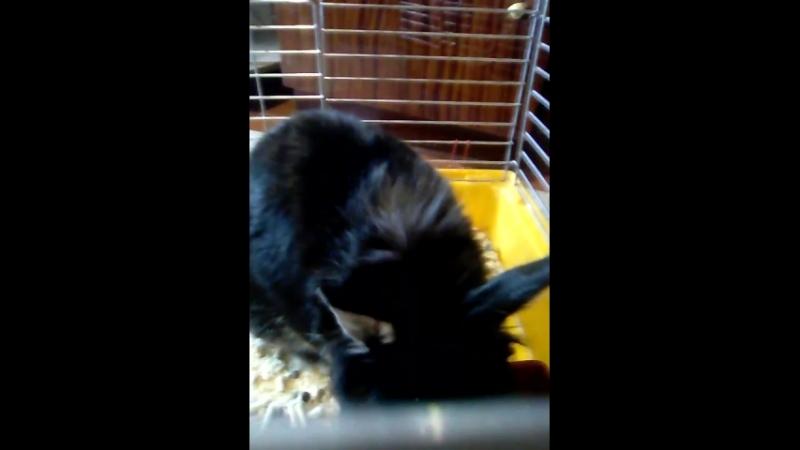 Мой кролик Веник