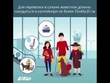 Перевозка животных | UTair