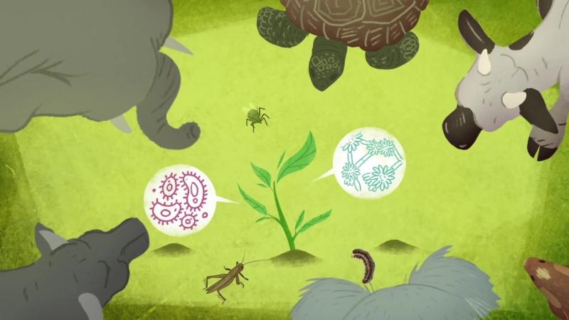Поразительные способы защиты, которыми обладают растения | Озвучка DeeAFilm