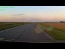 лисята на дороге