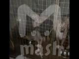 Под Мурманском приют для животных оказался живодёрней