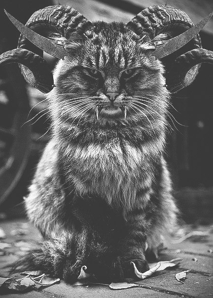 Dead-Hollow King | Москва