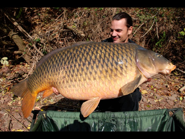 American carp record (USA) at 54lb 8oz (24,7 kg) - Raphaël Biagini