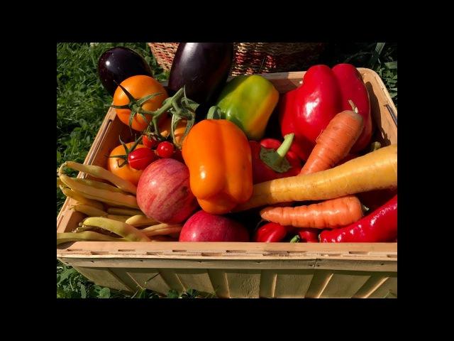 Чем подкормить сад осенью Работы на даче в сентябре Виталий Декабрев