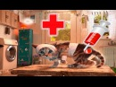 ПРИКЛЮЧЕНИЕ МАЛЕНЬКОГО КОТЕНКА мультик смешное видео для детей мультфильм про котиков УШАСТИК КИДС