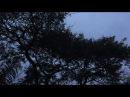 Amanhece: o Jacarandá. Tiguera 360. Juiz de Fora, MG, Brasil. IMG_3824. 187,6 MB. 05h24. 04out17