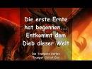 ENTKOMMT DEM DIEB DIESER WELT DIE ERSTE ERNTE HAT BEGONNEN ❤️ DIE TROMPETE GOTTES