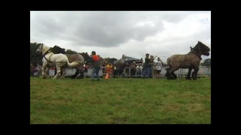 TUG OF WAR 8 Horses against 8 Horses