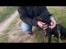 Хозяин привел собаку на речку чтобы ......... пришлось вмешаться. Му-Му 2017.