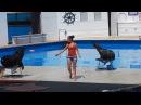 Выступление морских котиков в Дельфинарии, 11.07.2017