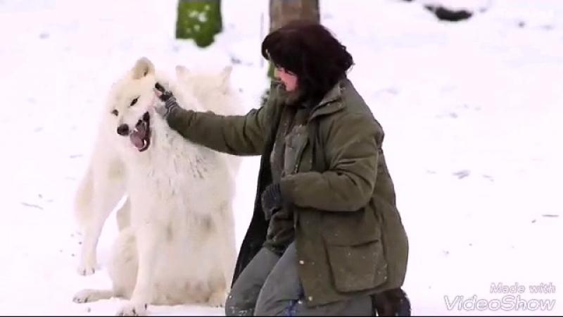 Дикая волчица