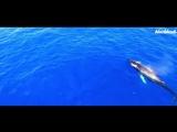 kavabanga Depo kolibri - Глубина (2018) | Трек | Клип | Музыка в машину | Кавабанга Депо Колибри