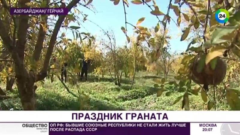 Более 60 сортов_ в Азербайджане состоялся праздник граната - МИР 24