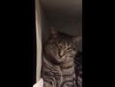 Рания-Рыся, видео привет