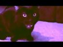 MADEVIL - Поющий кот 2