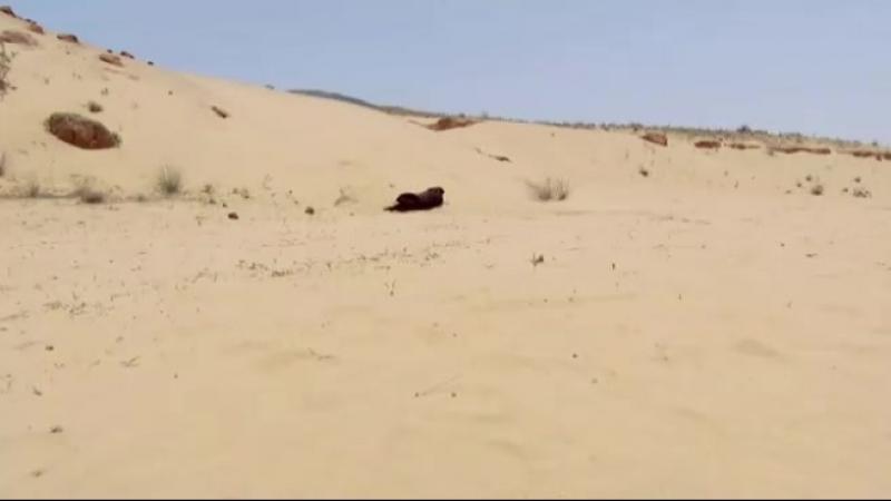 Страдания Асада и Зои в пустыне 😔💔❤