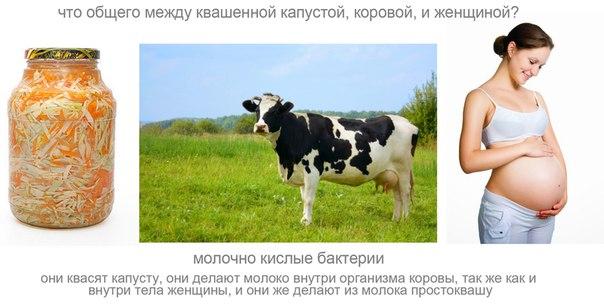 Секс извращение над коровой скота видео