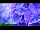 Диловар Сафаров - Насихат ( Кисми 5 ) | Dilovar Safarov - Nasihat ( Qismi 5 )