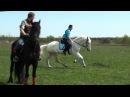 Лошади и собаки