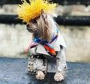 Самая модная собака в Париже