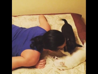 Видео: Гела Гуралиа - #ночныеигры #чихуахуа #chihuahua  04.12.2017